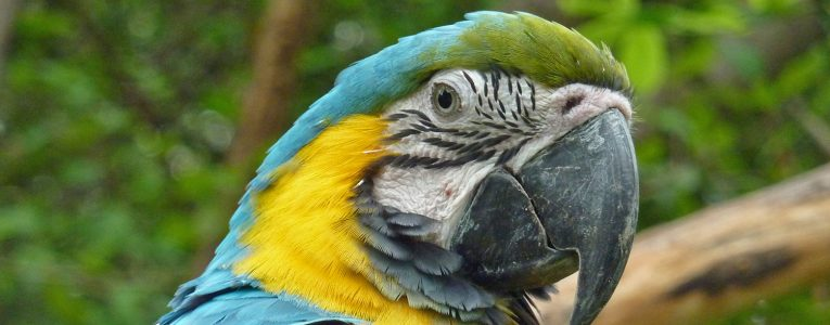 Zoo Guayaquil
