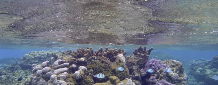 Fond marin à l'est de Bora