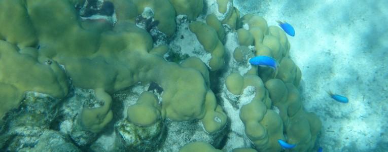 Fond marin à Parea