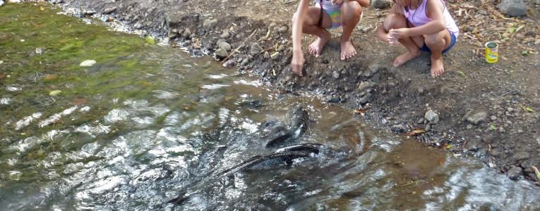 Anguilles sacrées