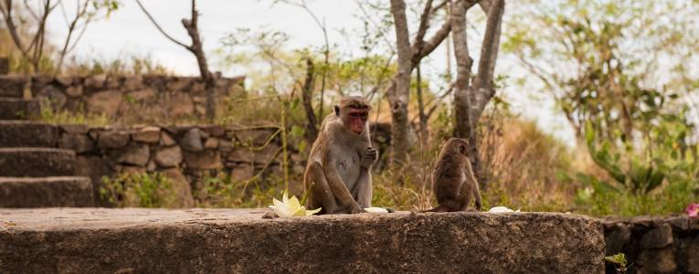 En route vers les grottes de Dambulla