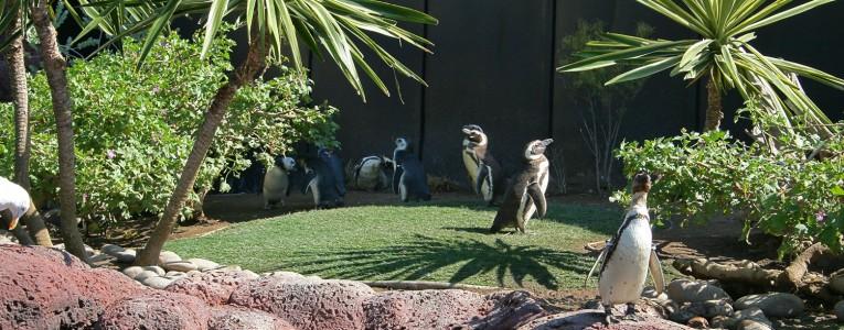 Pingouins et manchots