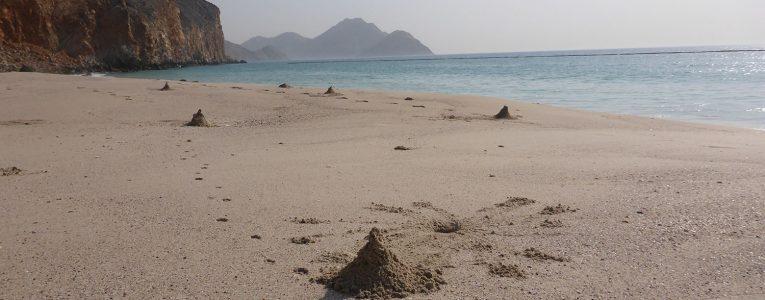 Tas creusés par les crabes sur la plage du Six Senses à Oman