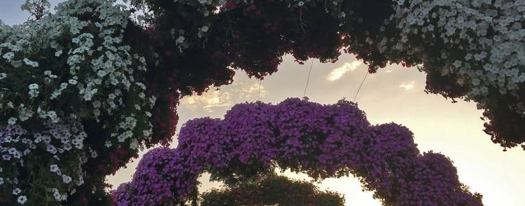 Dubaï Miracle Garden