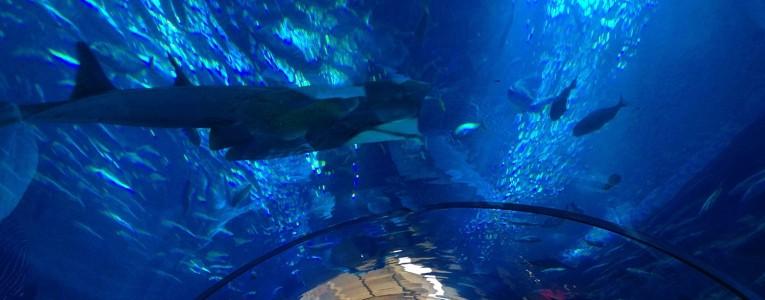 L'aquarium du Dubai Mall