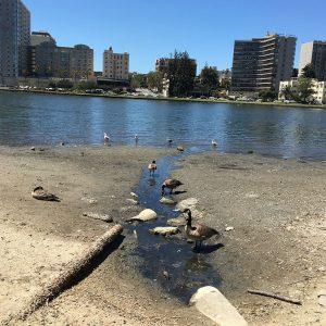 Devant le lac Merritt au Lakeside Park d'Oakland
