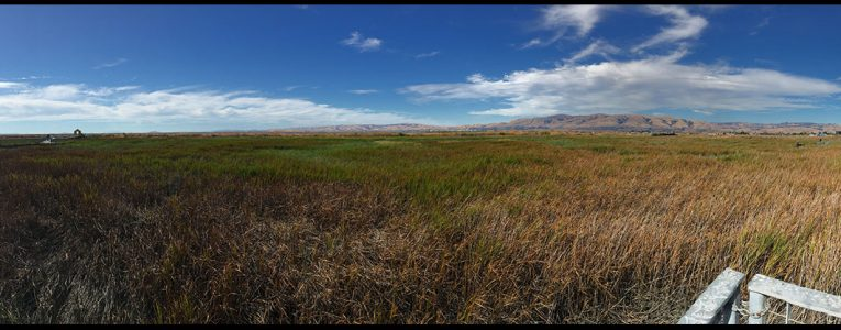 Vue panoramique d'Alviso County Park depuis le parking