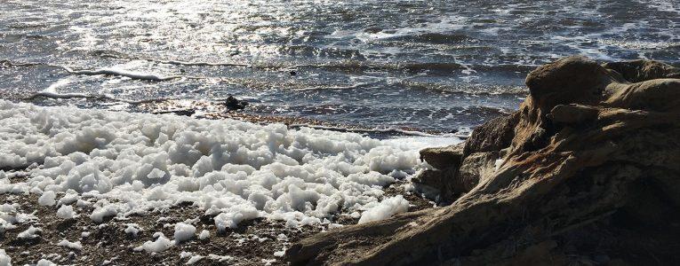 Mousse de sel à Alviso Park