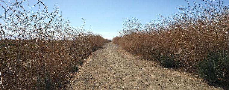 Debut du trail de 9 miles à Alviso Park