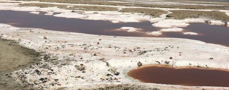 Plaques de sel au Alviso Parc sur le Trail de 9 miles